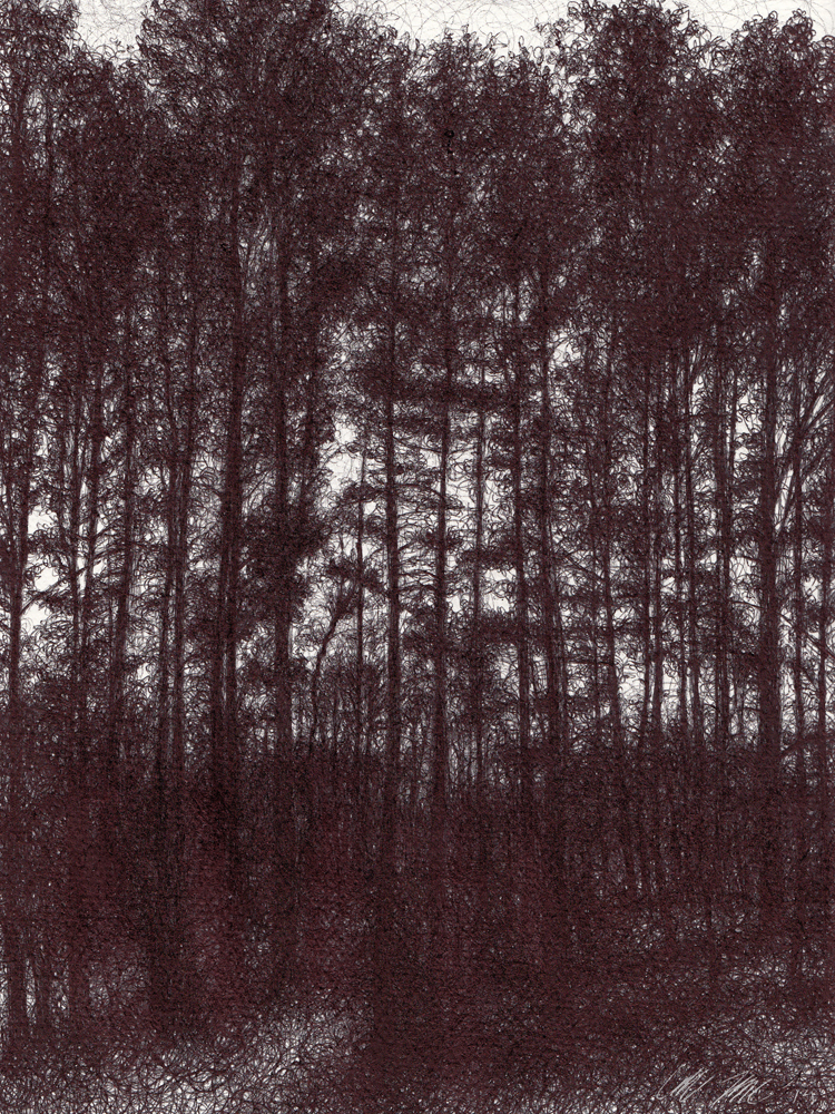 "Reverence, 2014,  Ballpoint pen on paper,  12""x9"" Private Collection Prints available at the <a href=""http://theartofcolleenblackard.bigcartel.com/product/nurture"">online store</a> <br><br><i> This drawing of pine woods silhouetted in the fading daylight echoes stained glass windows and like the Gothic cathedrals, leaves us feeling dwarfed by their scale as we follow their linear shape upwards, towards the heavens, in reverence of the beauty and stillness of nature.</i>"