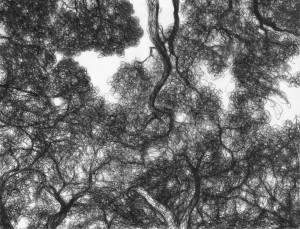 Tree Sketch (1)