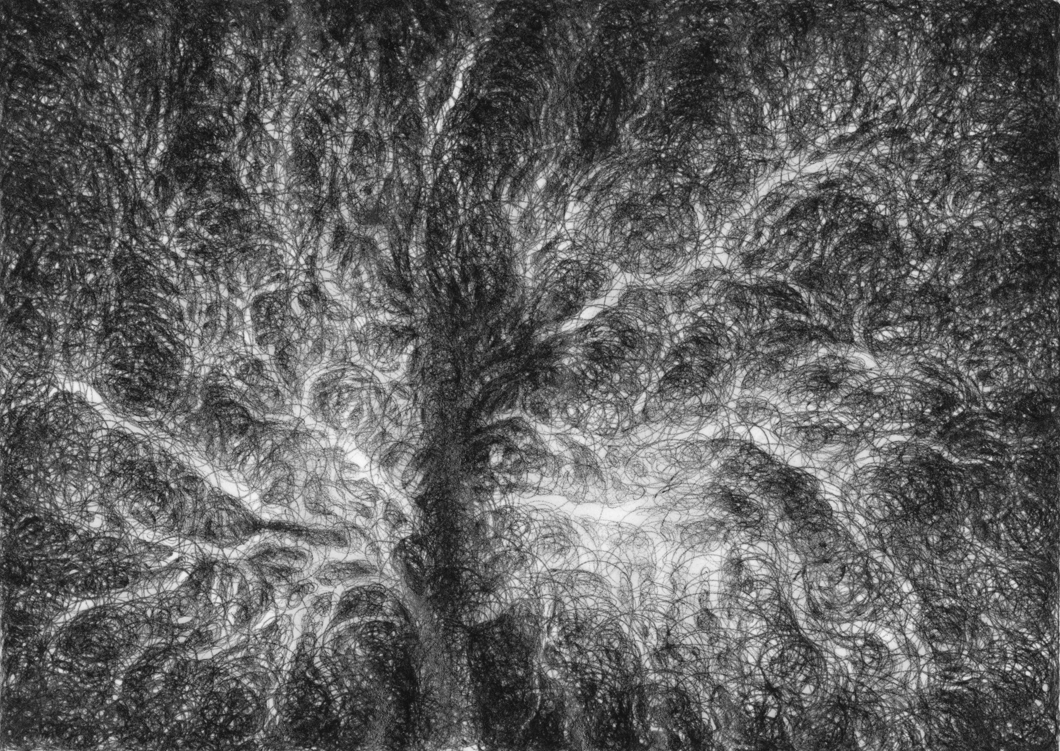 Tree Sketch (2)
