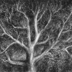 Tree Sketch (3)