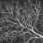 Tree Sketch (4)