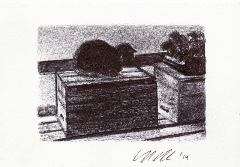 "Box Cat, 2014 Ballpoint pen on paper greeting card 4""x3"" Available. Prints on greeting cards are also available on the <a href=""http://theartofcolleenblackard.bigcartel.com/product/cat-cards-box-cat"">online store</a>."