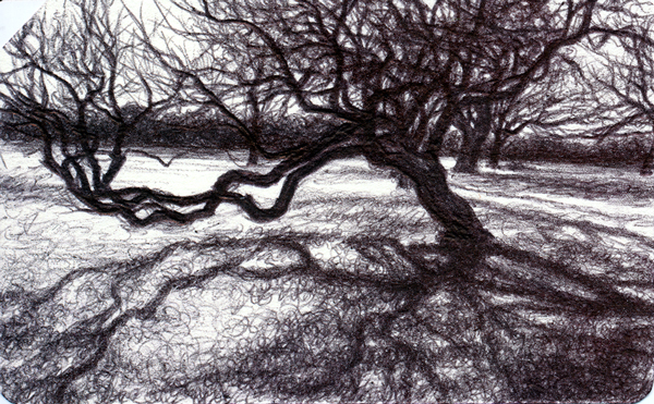 Live Oak, Archival ballpoint on Metrocard, Private Collection