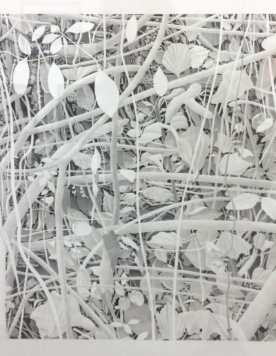 Bill Richards, Hanging Leaves, Woven Branches, 2015, graphite on paper, Nancy Hoffman Gallery, New York, NY